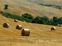 AGRICOLTURA.9